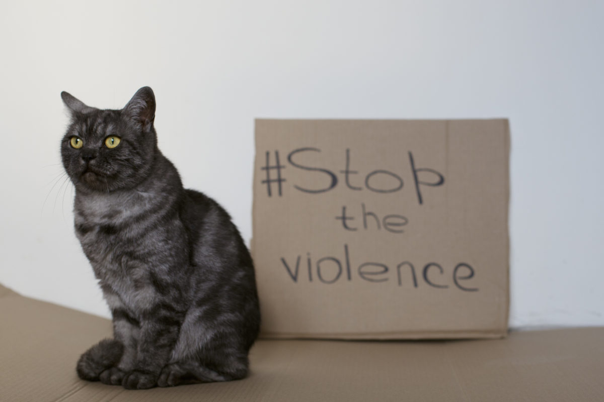 Including pets in protective orders is important for. many reasons, especially in cases of domestic violence.