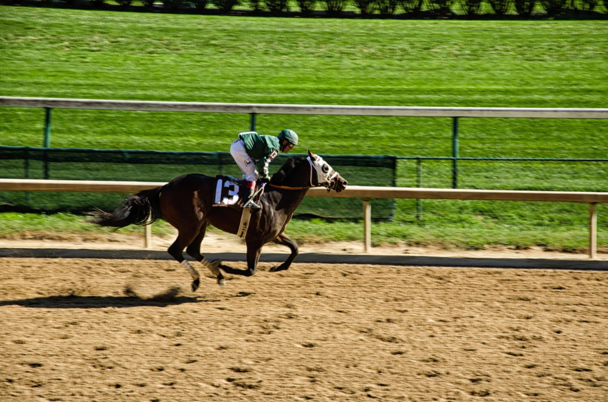 Representative image of a horse race in progress | Photo byUSA-Reiseblogger|Pixabay