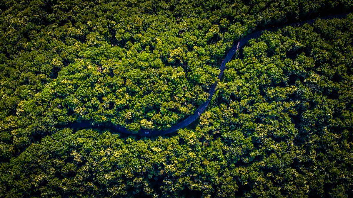 Representative aerial photo of a lush, forest landscape | Photo by Vlad Hilitanu on Unsplash