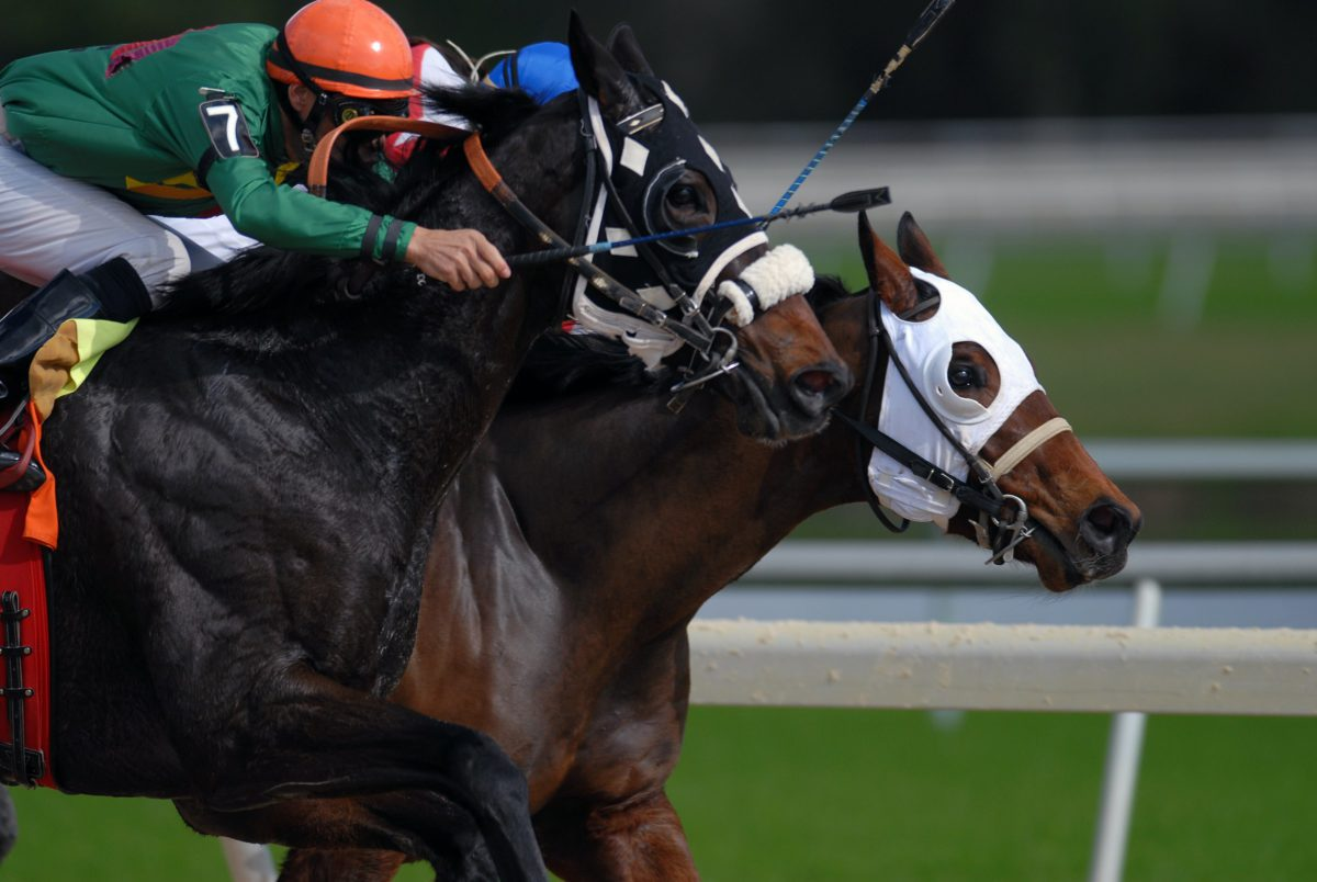 Representative photo of a horse race in progress | Photo by Jeff Griffith on Unsplash